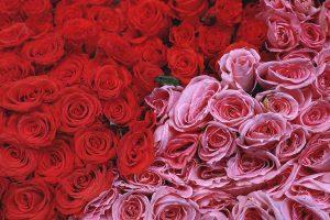 flower wallpaper A2