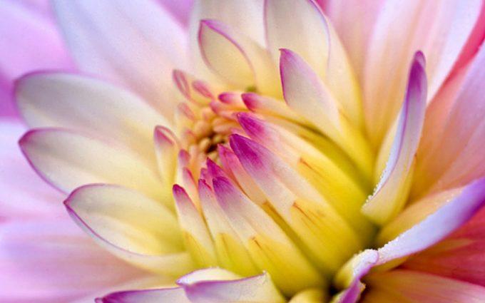 flower wallpaper A23