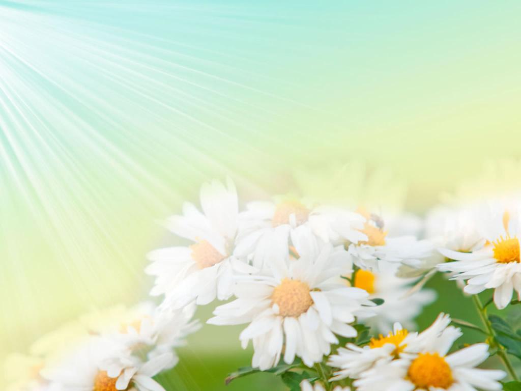 flower  wallpaper A25