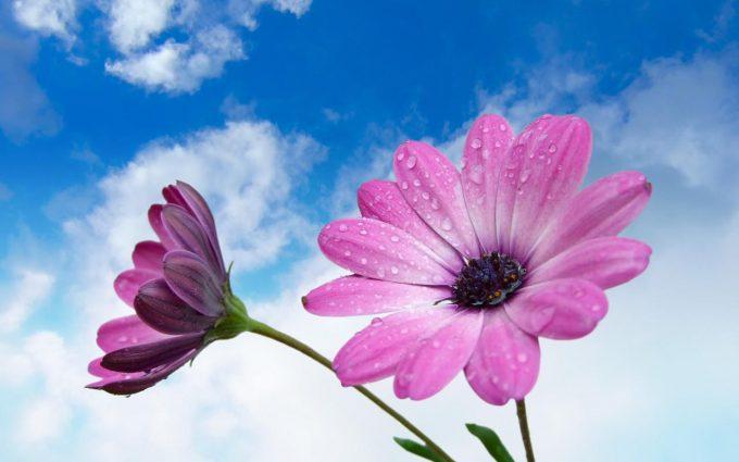 flower wallpaper A33