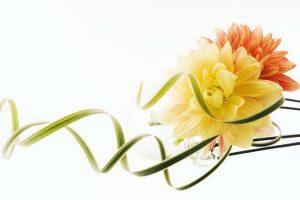 flower wallpaper A4