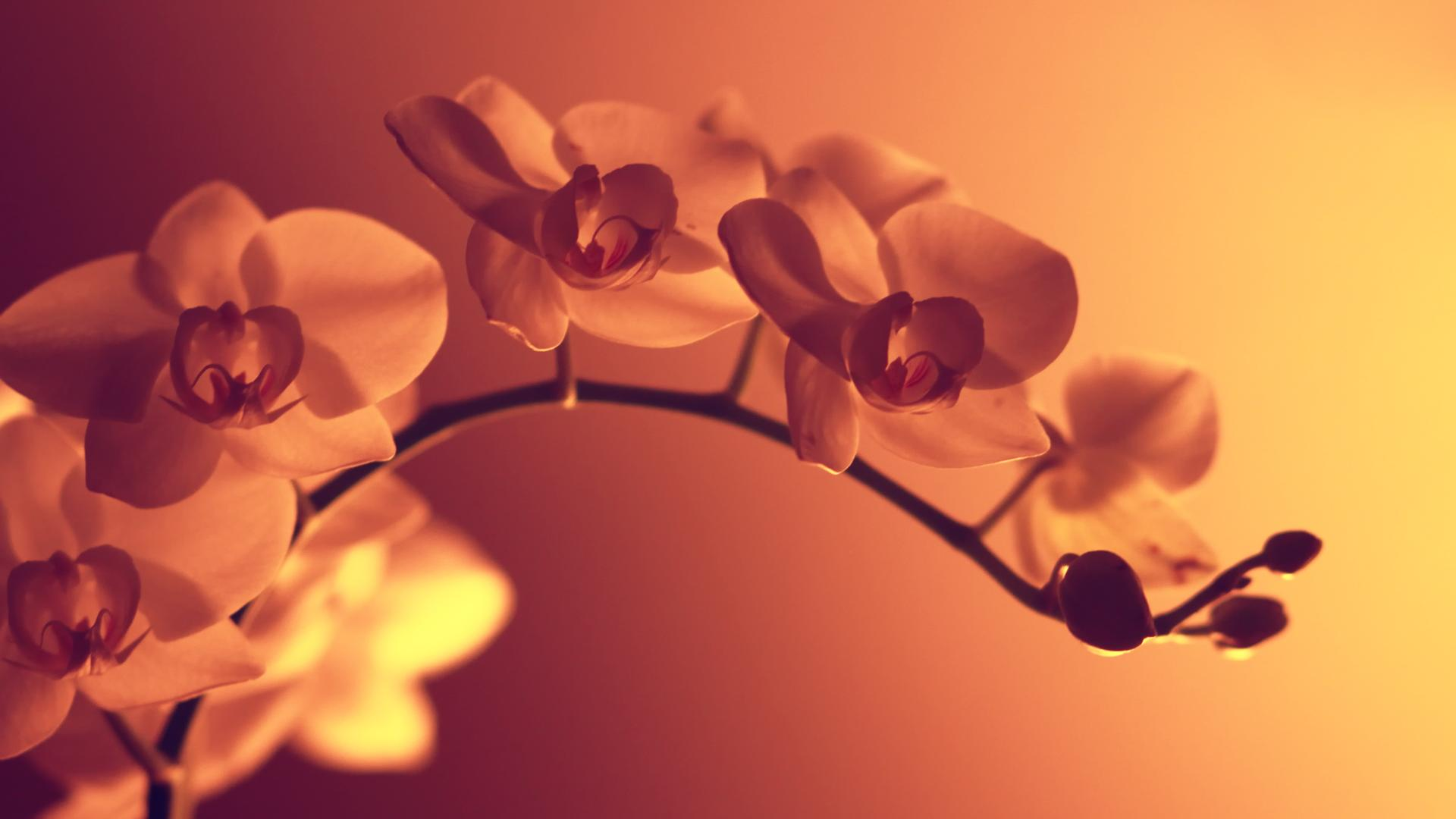 flower wallpaper A6