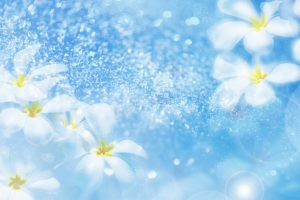 flower wallpaper A7