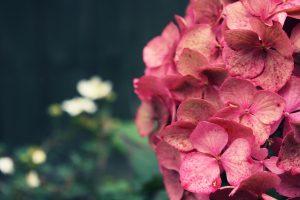 flower wallpaper a30
