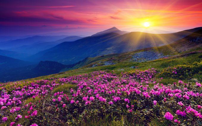 flower wallpaper cool meadow