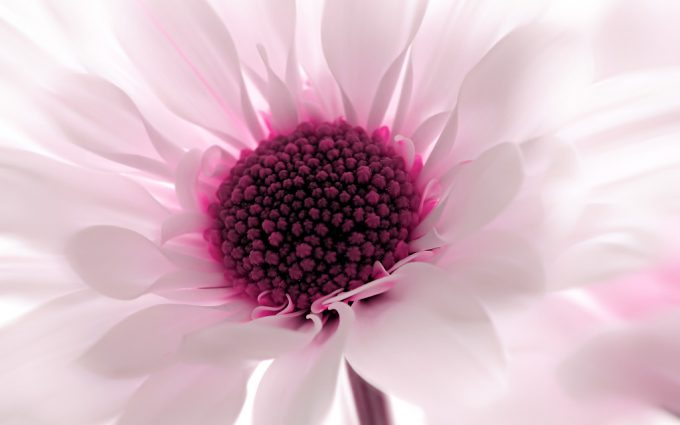 flower wallpaper desktop backgrounds