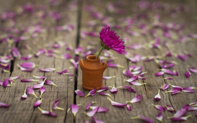 flower wallpaper petals download