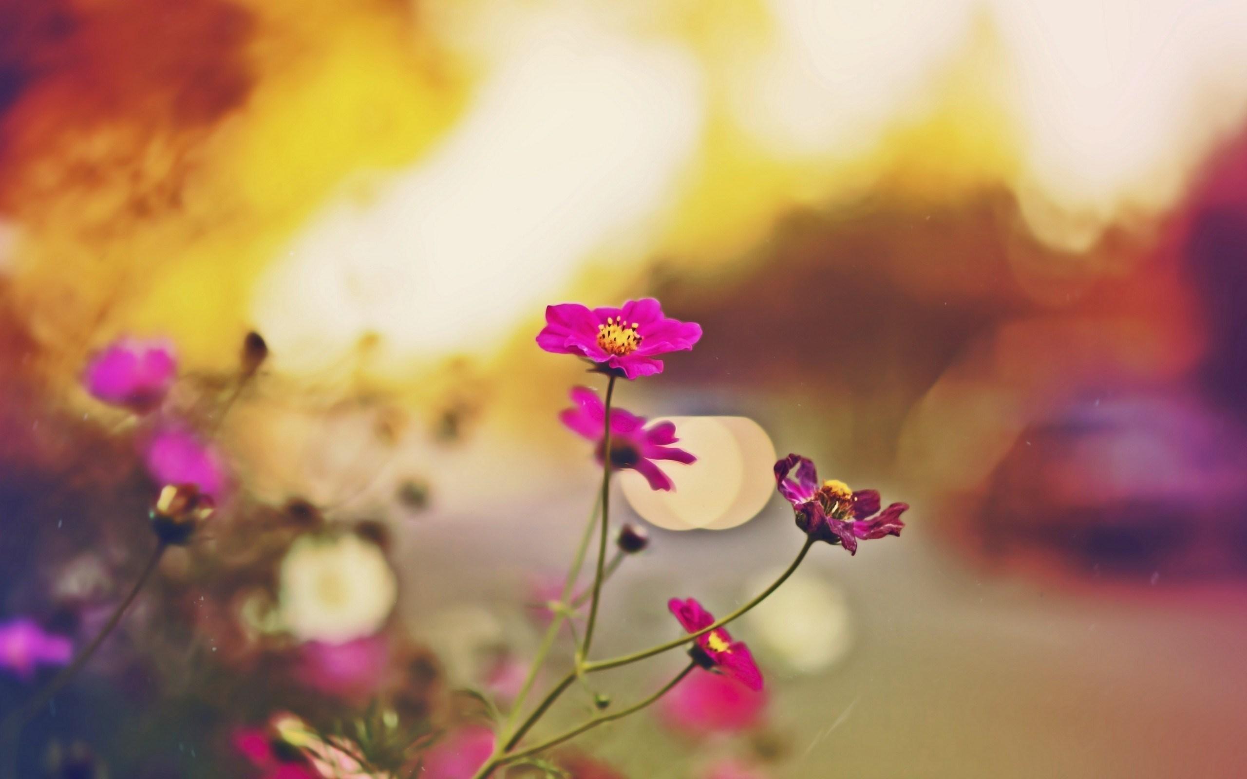flower wallpaper petals lovely