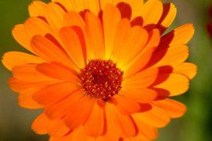 flower wallpaper stunning A11