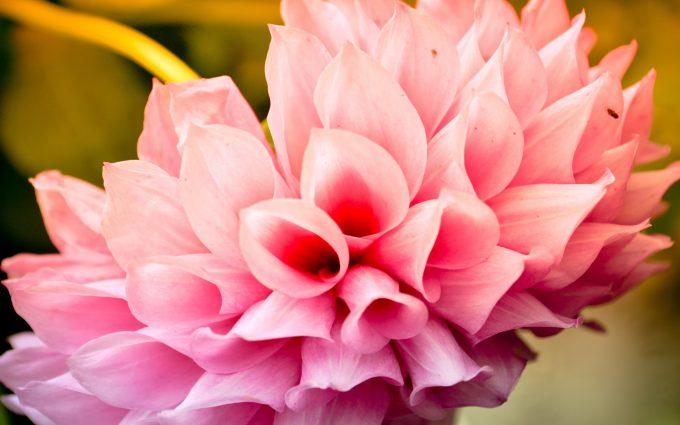 flower wallpaper stunning A5