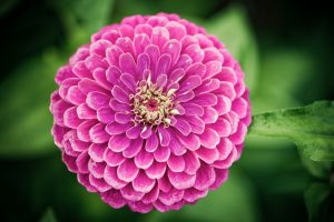 flower wallpaper stunning pink