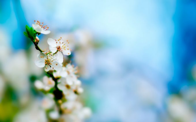 flower wallpapers cool A5