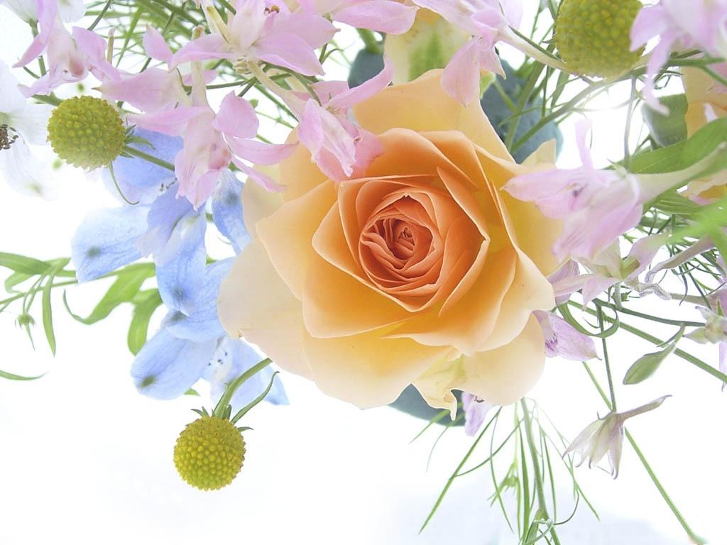 flower wallpapers hd