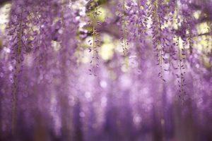 flowers bokeh macro nature
