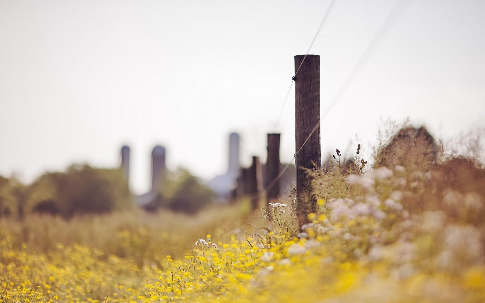 flowers field fence landscape