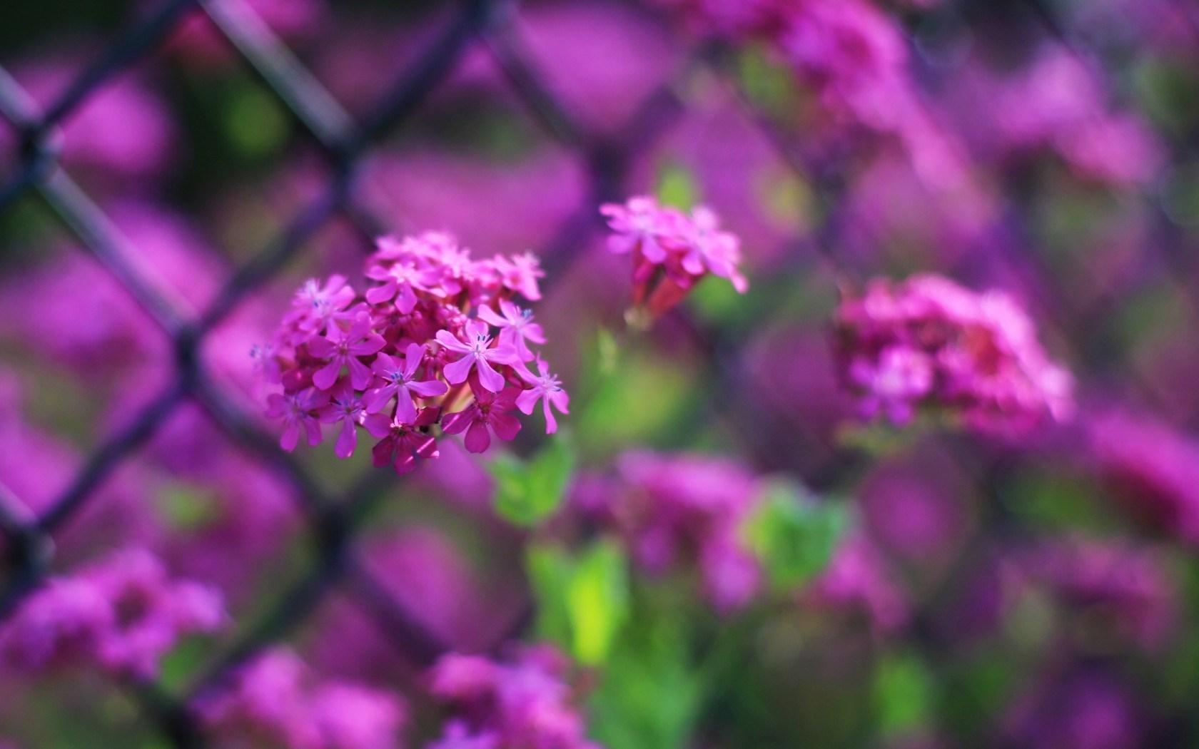 flowers focus fence