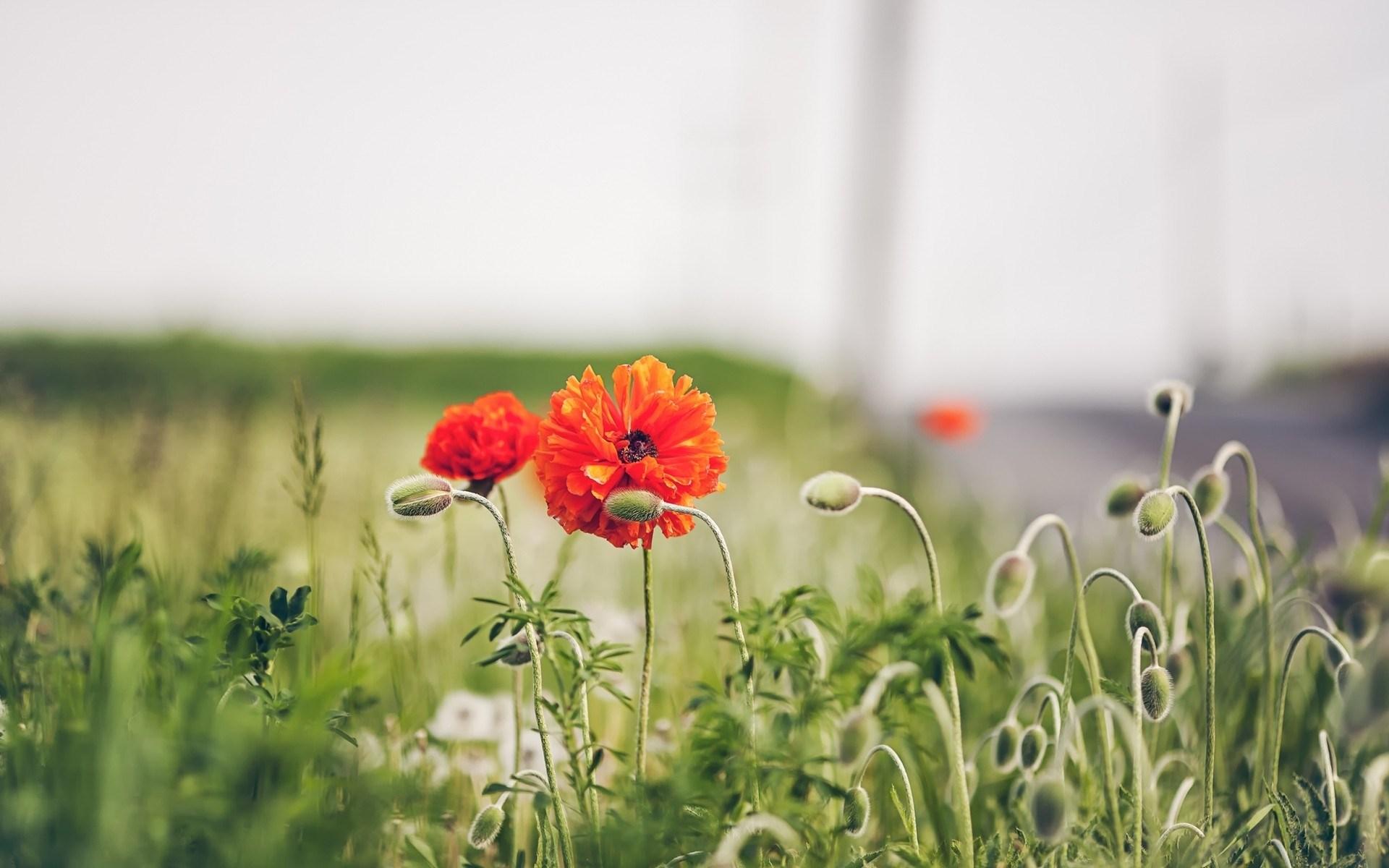 flowers grass nature