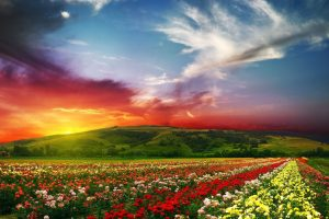flowers landscape backgrounds