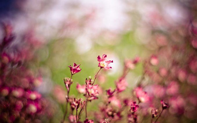 flowers landscape free