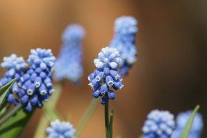 flowers light macro