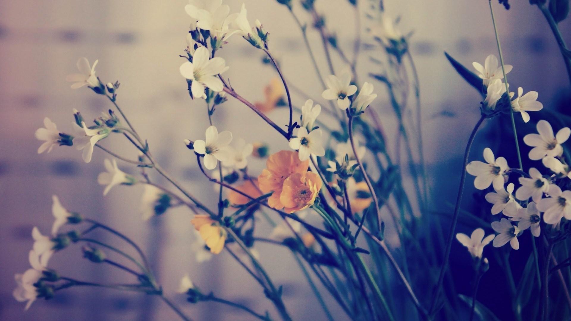 flowers macro photo