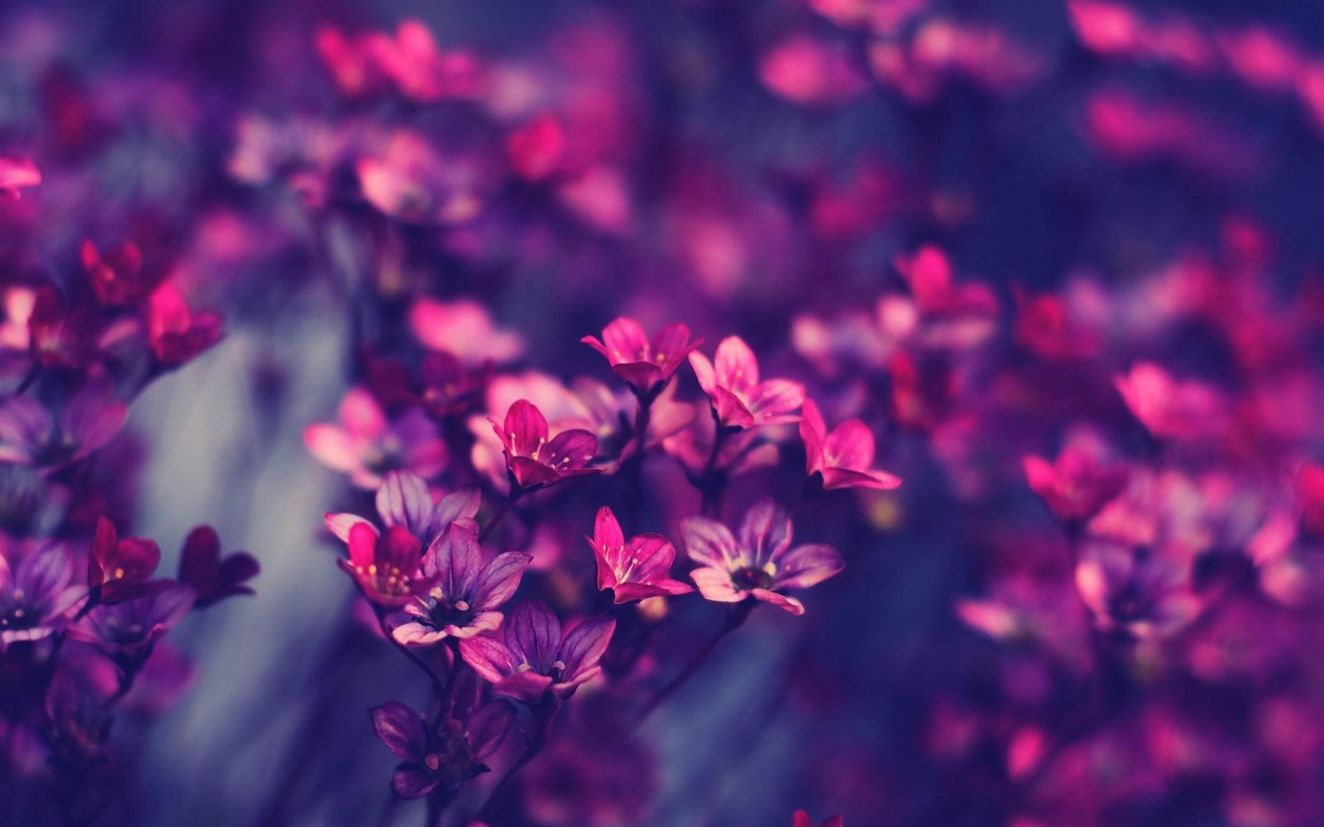 flowers nature macro