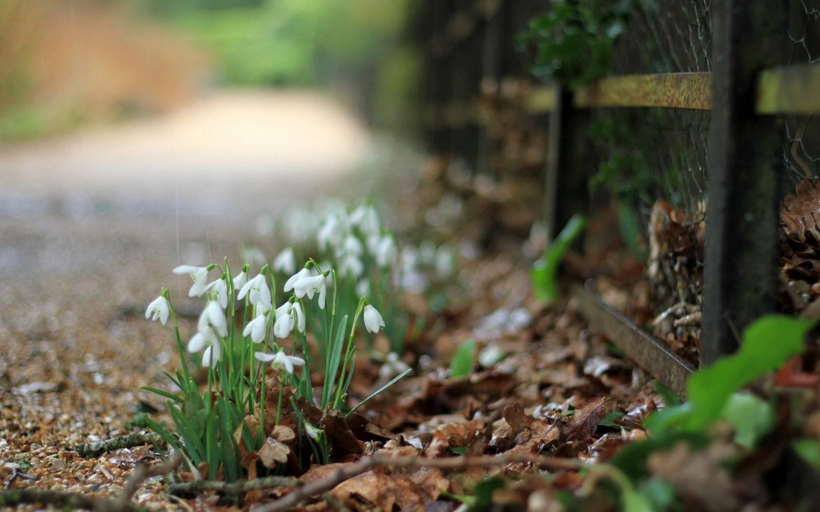 flowers spring dew drops