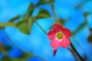 flowers spring screensavers