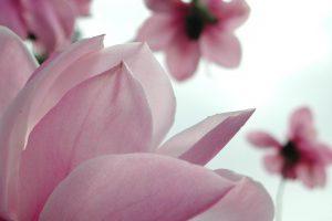 flowers wallpaper A32