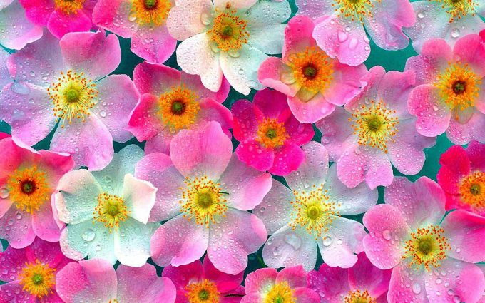 flowers wallpaper A9