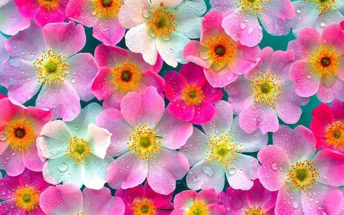 flowers wallpaper A9