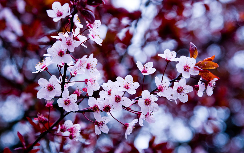 flowers wallpaper tumblr