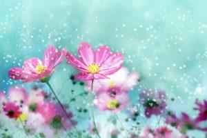 free flower image