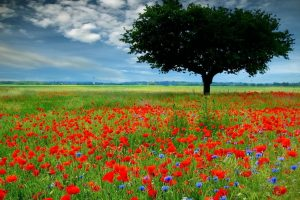 free flower picture