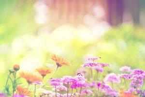 free flower wallpaper tumblr