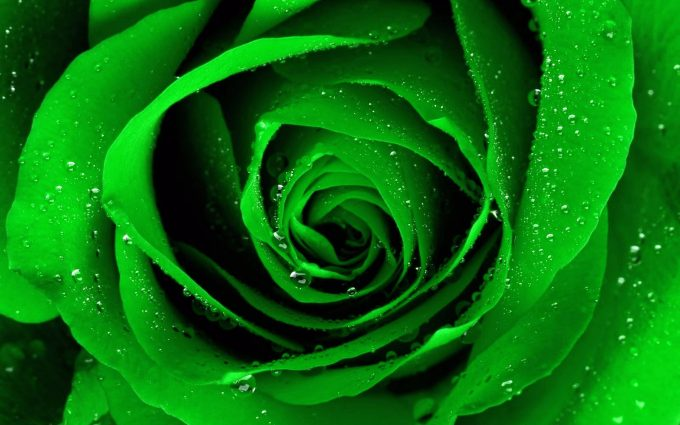free green flowers