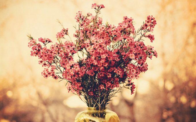 free macro flowers wallpaper A3