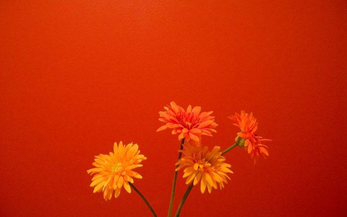 free orange flowers A1