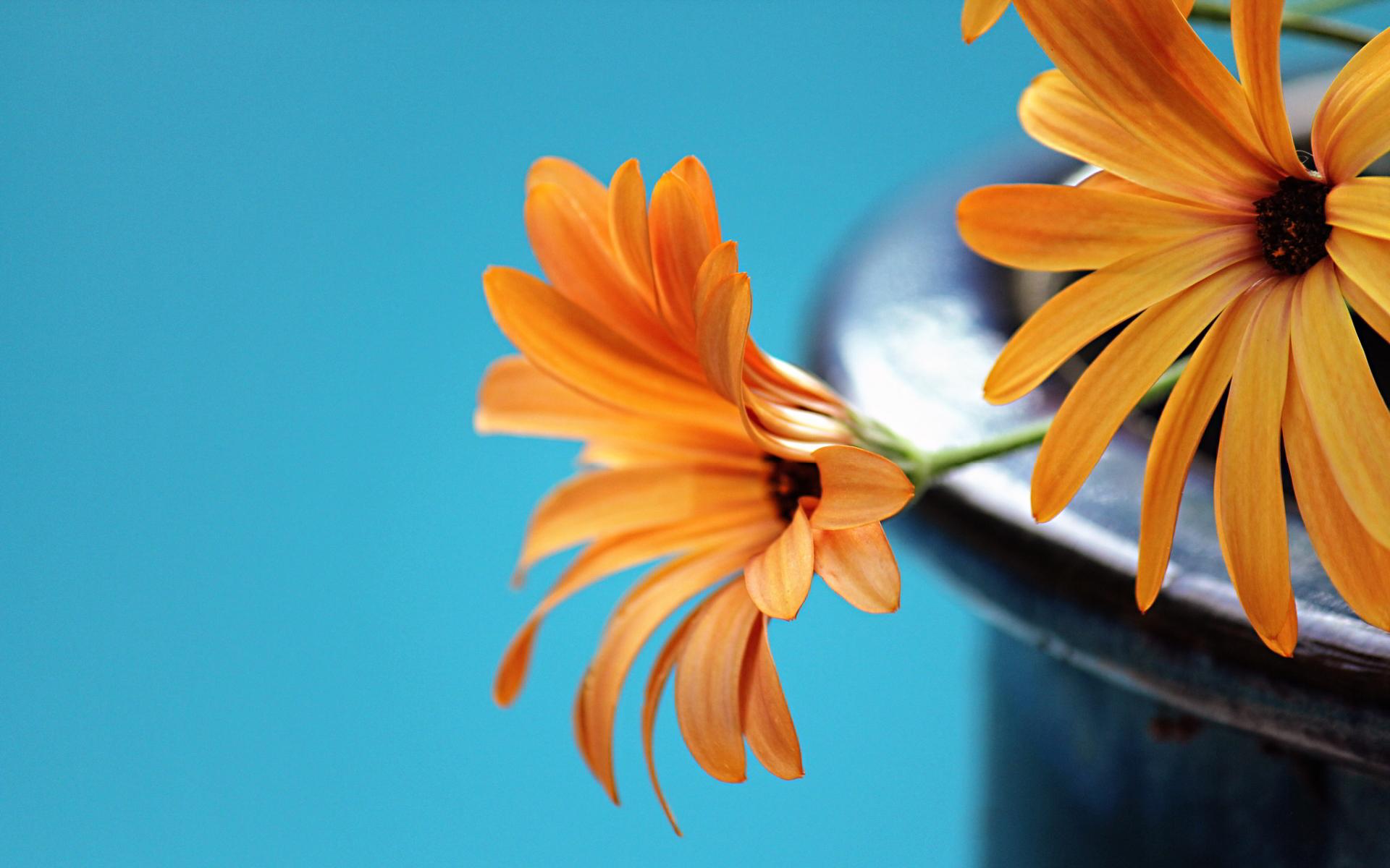 free orange flowers