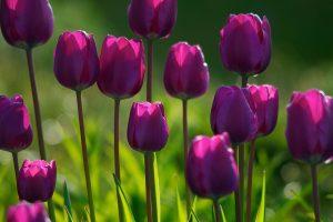 free spring screensavers