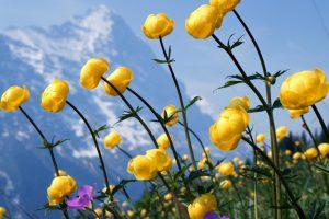 free wildflower wallpapers hd