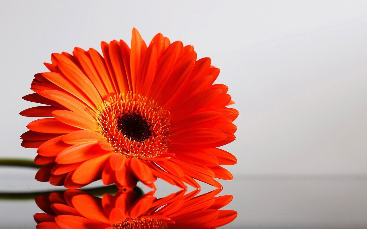3d live wallpapers of flowers