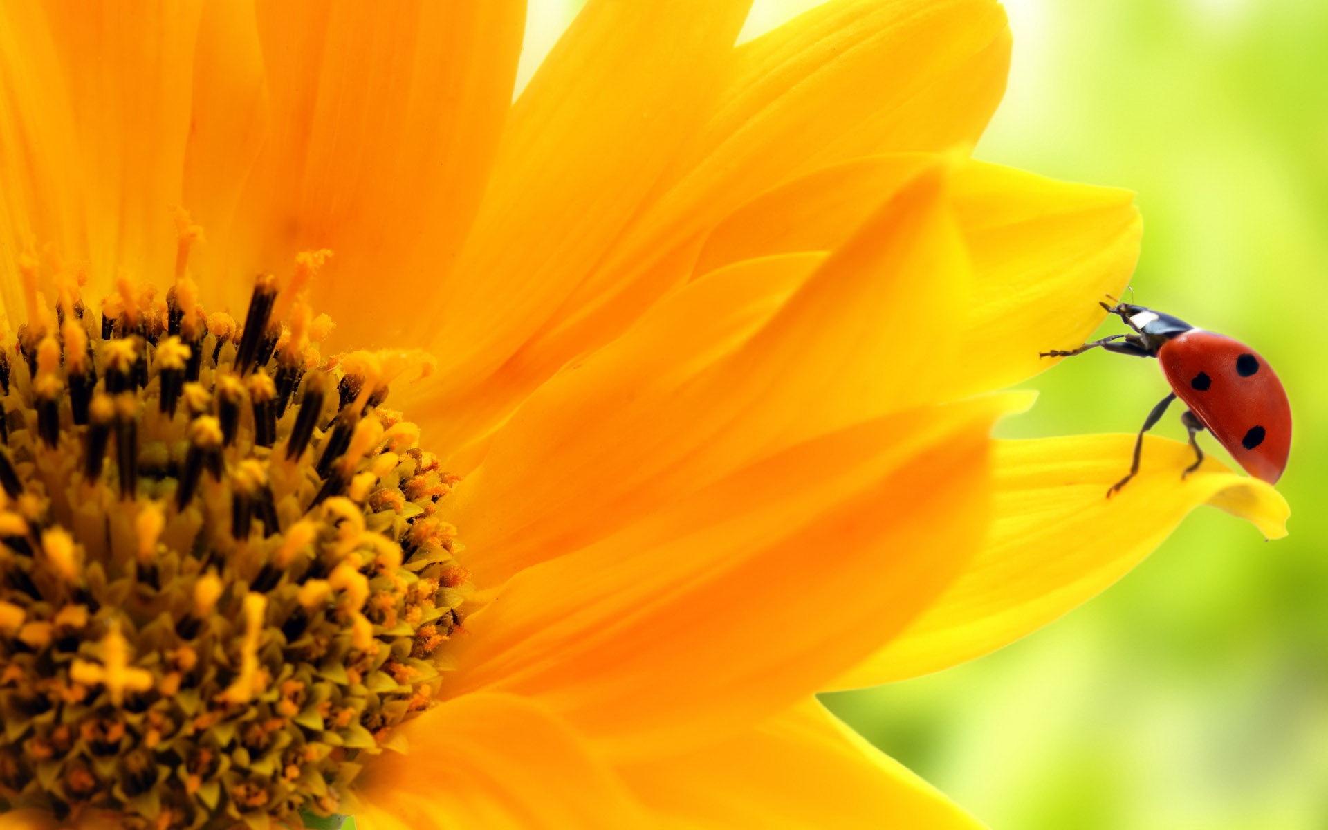 Giant Sunflower Pictures Hd Desktop Wallpapers 4k Hd