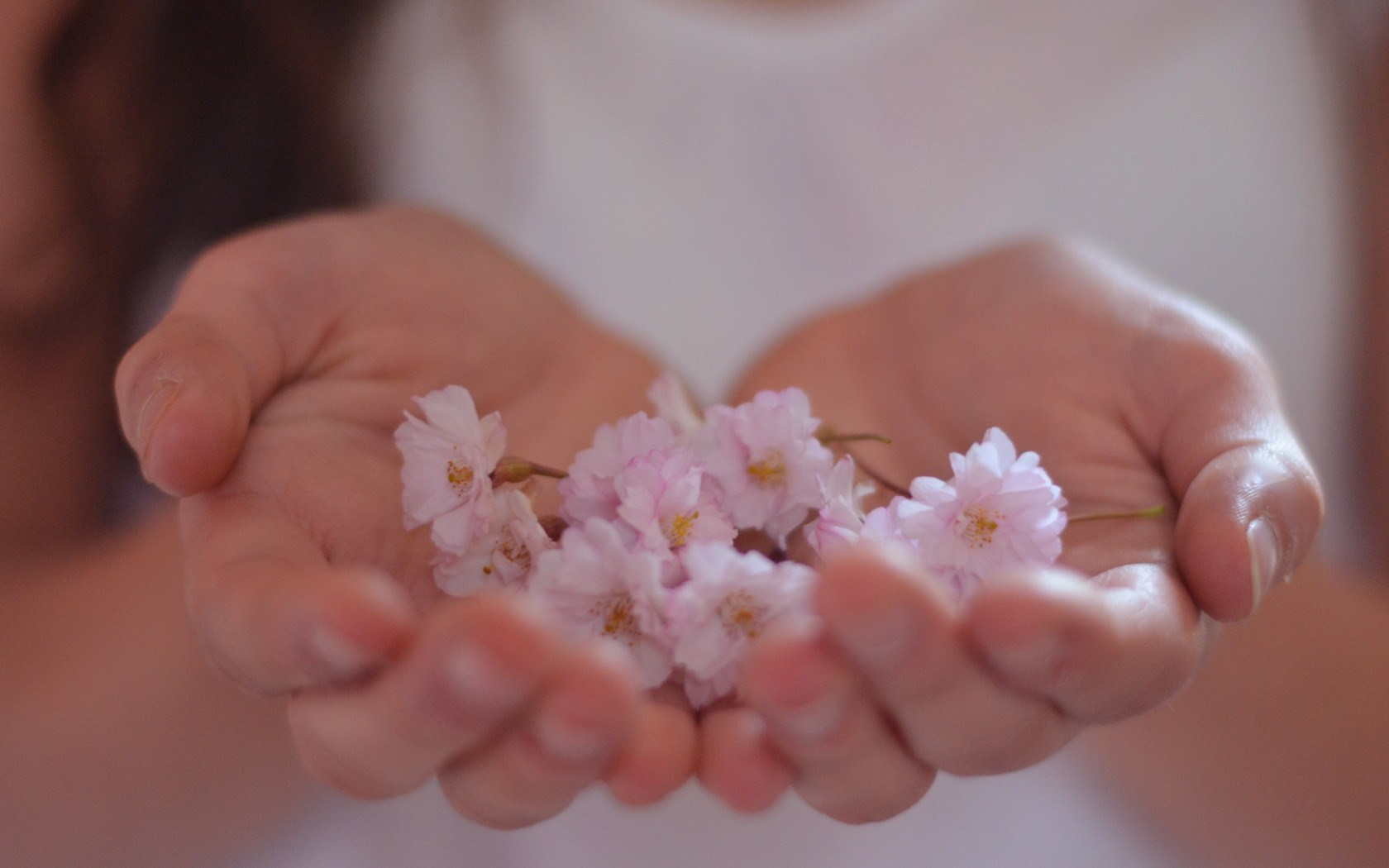 girl hands flowers photo