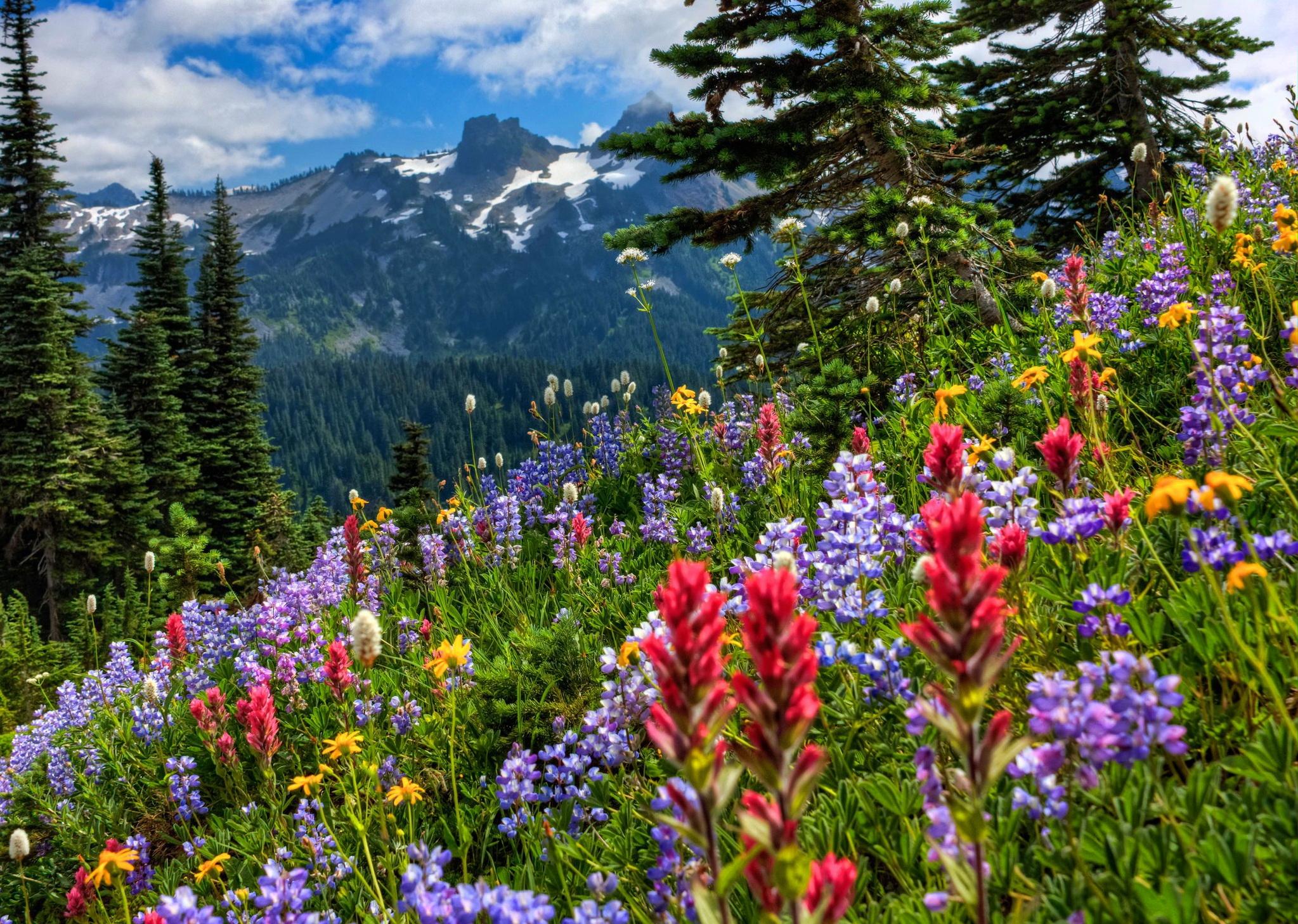 gorgeous meadow