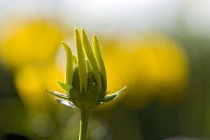 green flower A1