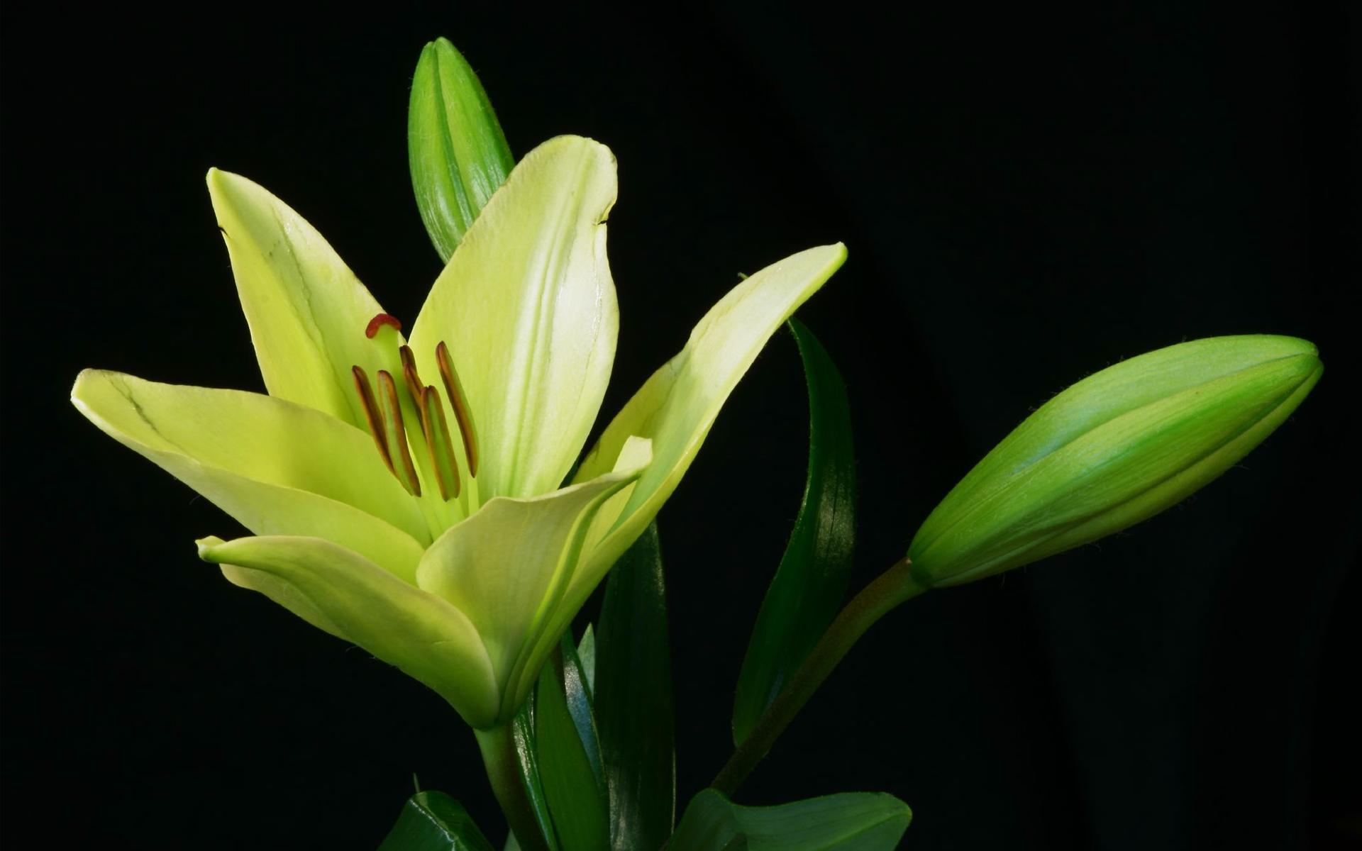 green flower A2