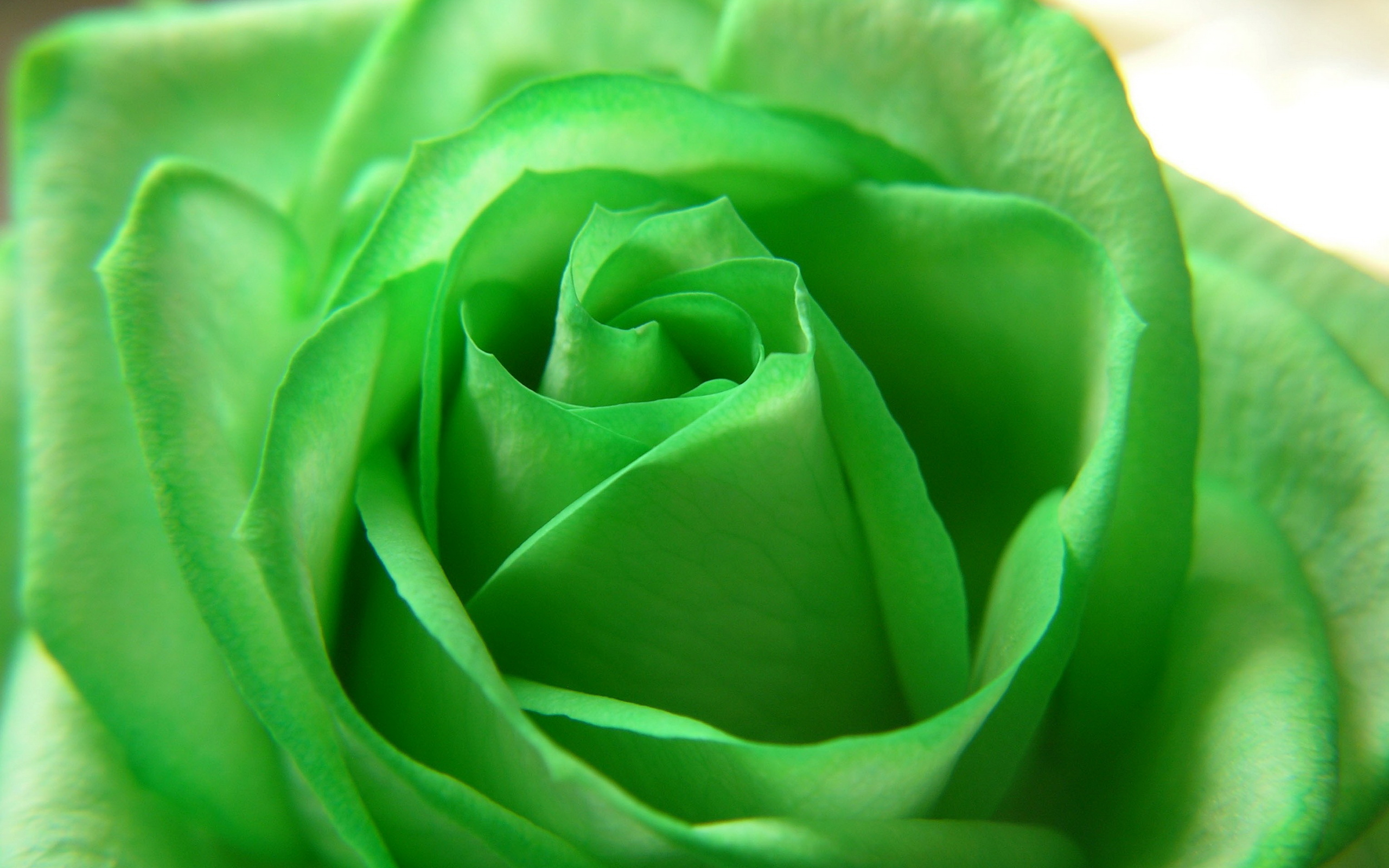 green flowers A3