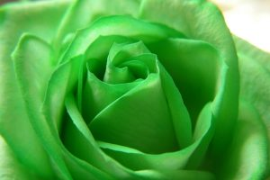green flowers hd