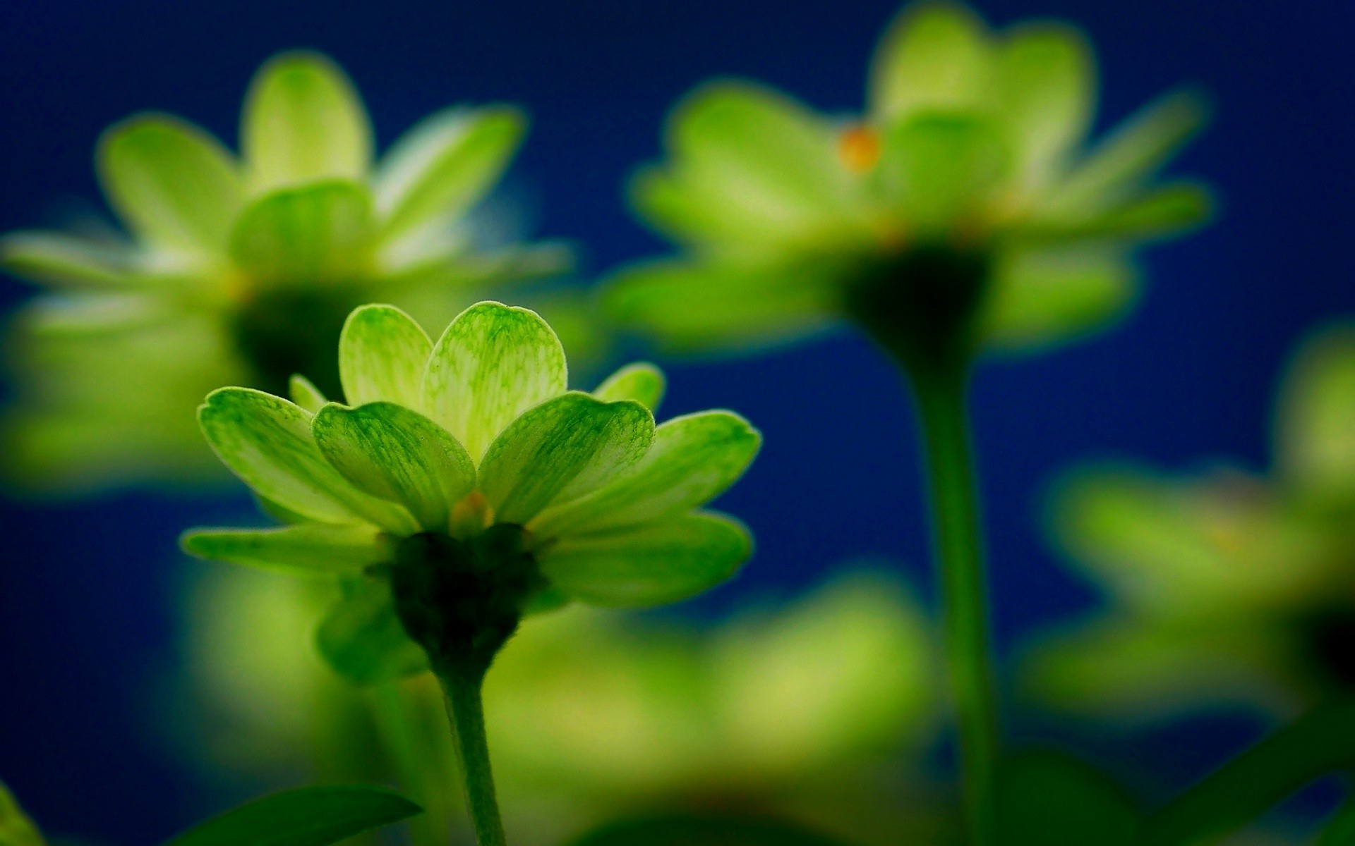 green flowers wallpaper